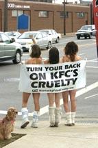 bojkotuj okrucieństwo KFC