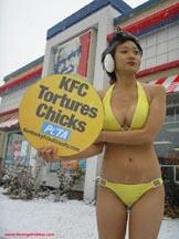 KFC torturuje kurczaki